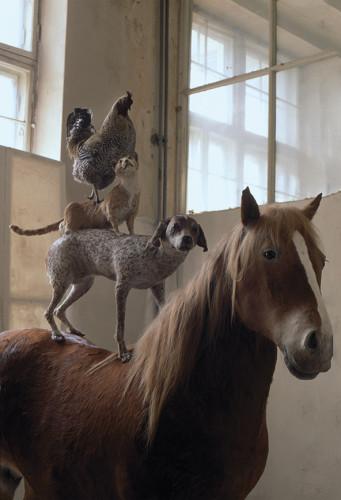 """Katarzyna Kozyra, """"Piramida zwierząt"""", jeszcze na Wydziale Rzeźby ASP, 1993. Dzięki uprzejmości artystki i Fundacji Katarzyny Kozyry."""